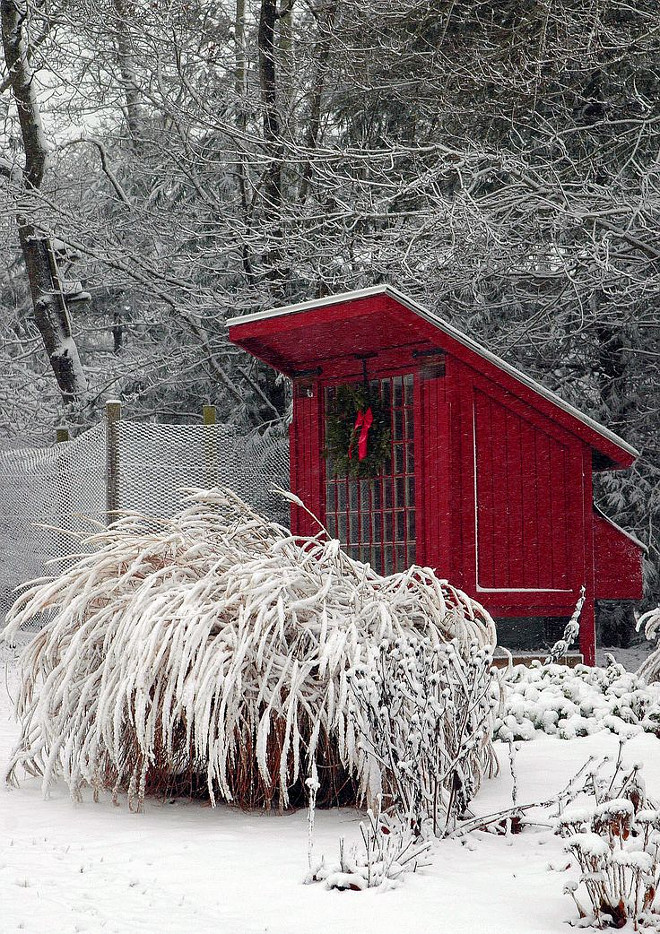 Chicken Coop decorated for Christmas. #ChickenCoop Via Home Talk.