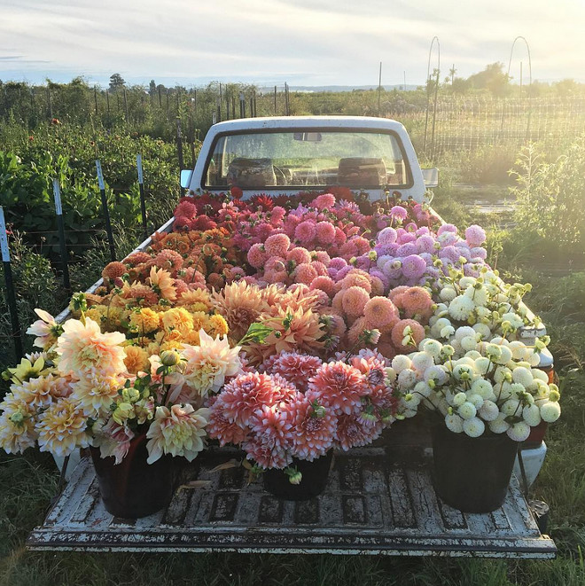 Flowers. Flowers. Flowers farm. Flowers in the back of an old truck.. #flowers #farm Via floretflower