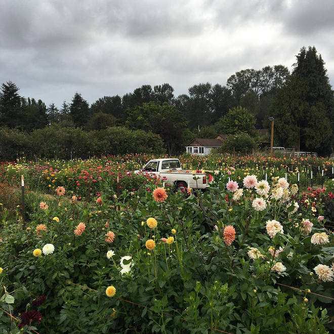Farmhouse. Flower Farm. Dreamy place to call home, flower farm with a small farmhouse and an old truck. #farmhouse #flowerfarm #oldtruck Via floretflower