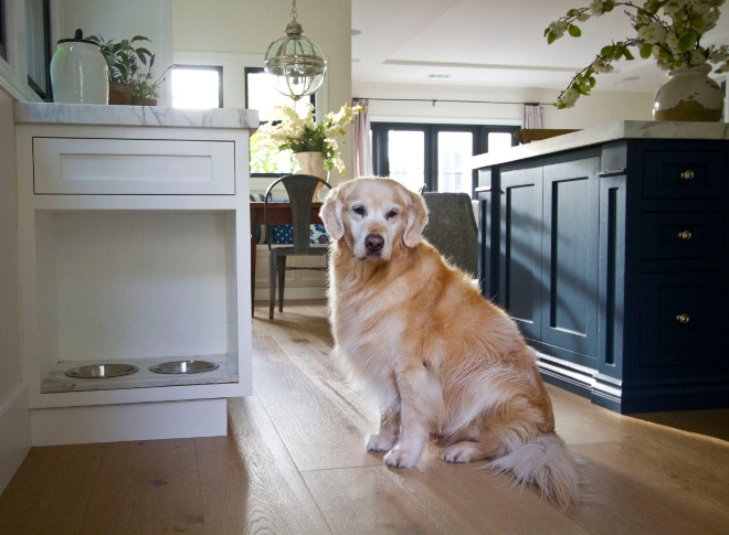 Built in Dog Feeding Bowl Cabinet in Kitchen. As you can see, our golden retriever, Miles, adores his own eat-in kitchen space, too! built-in-dog-bowl-cabinet #Pets #Builtinfeedingbowl #DogBowlCabinet #Kitchen Home Bunch Beautiful Homes of Instagram Bryan Shap @realbryansharp