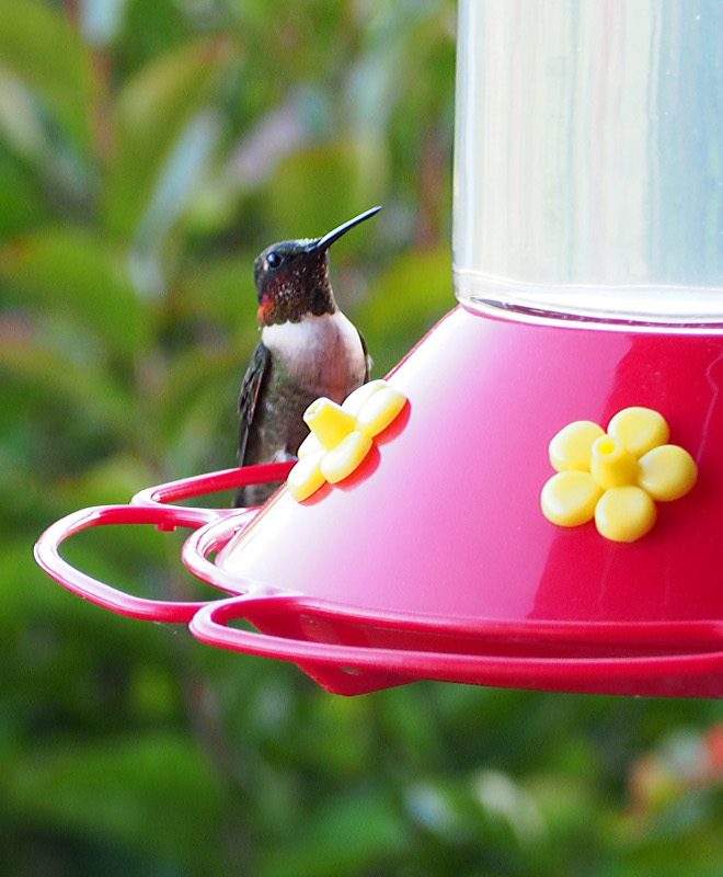 Humminbird. Our summer friends who make the long journey each year to feast on our feeders and provide free entertainment! Home Bunch Beautiful Homes of Instagram wowilovethat