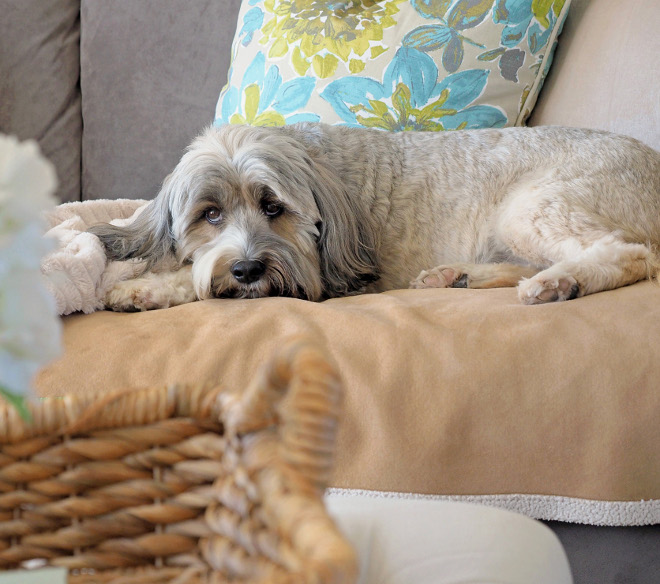 Harper is our, almost human, Tibetan Terrier and he matches our décor perfectly! #TibetanTerrier Home Bunch Beautiful Homes of Instagram wowilovethat