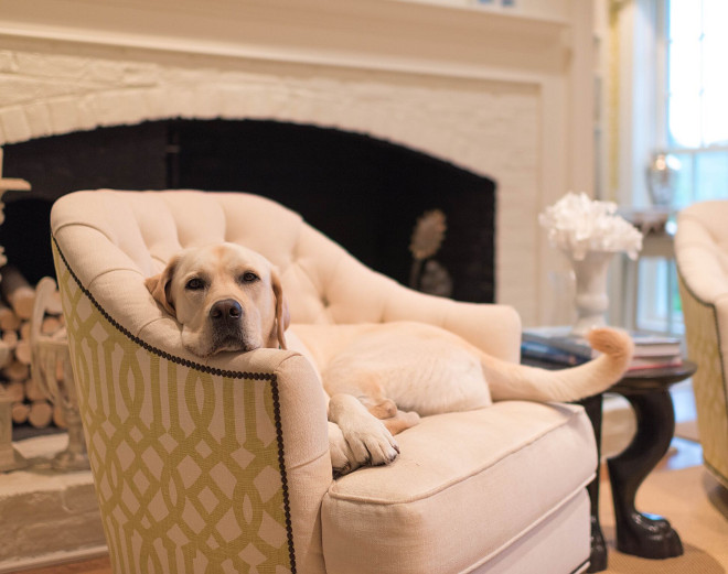 Dogs. Dog on chair. Dogs. #Dogs #Pets #DogChair #Chair Home Bunch's Beautiful Homes of Instagram @loveyourperch