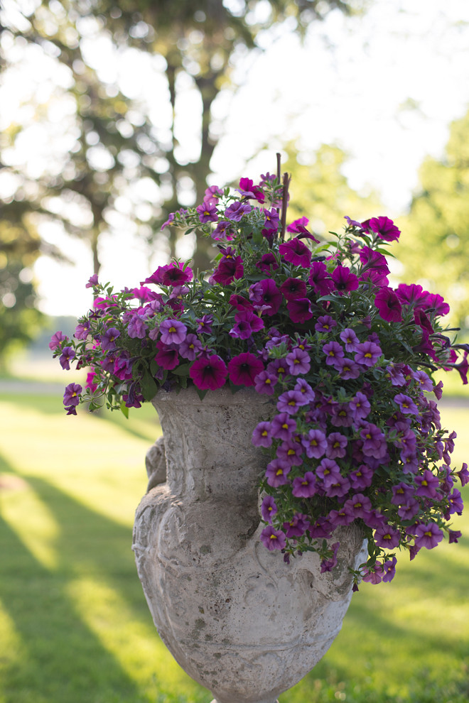 Planter Flower Ideas. Planters. Front door planters. Deciding what to plant in the urns makes me happy. I have a confession to make… I change them out a few times a season. I just can't help myself! Door planter flower ideas #planters #flowers #doorplanters Home Bunch's Beautiful Homes of Instagram Cynthia Weber Design @Cynthia_Weber_Design
