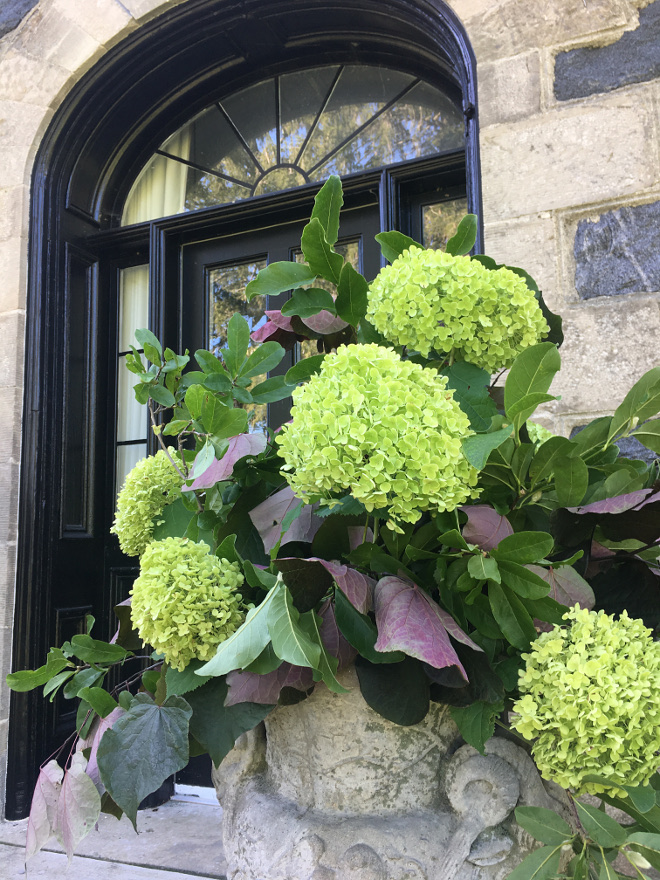 Lime hydrangeas planter. Lime hydrangeas planter. Lime hydrangeas planter. Lime hydrangeas planter. Lime hydrangeas planter #Limehydrangeas #planter @cynthia_weber_design