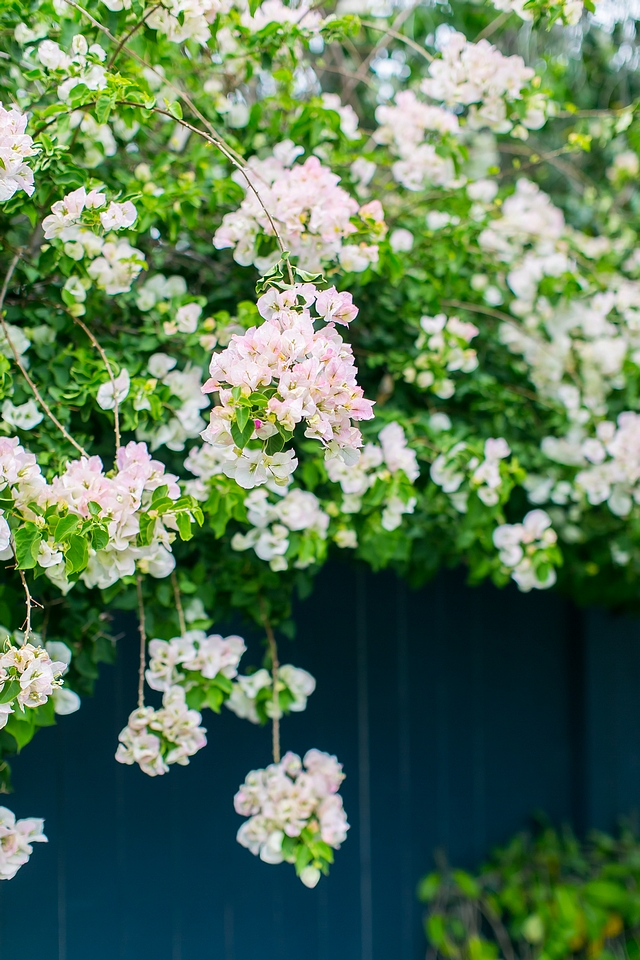 Plants New plants for backyard Plants by fence Garden Ideas Wisteria #garden #backyard #planst #fence #wisteria