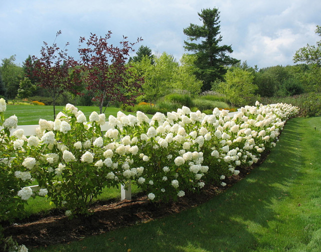 Garden Ideas. Limelight Hydrangeas. #Garden #LimelightHydrangeas #Hydrangeas Linden L.A.N.D. Group