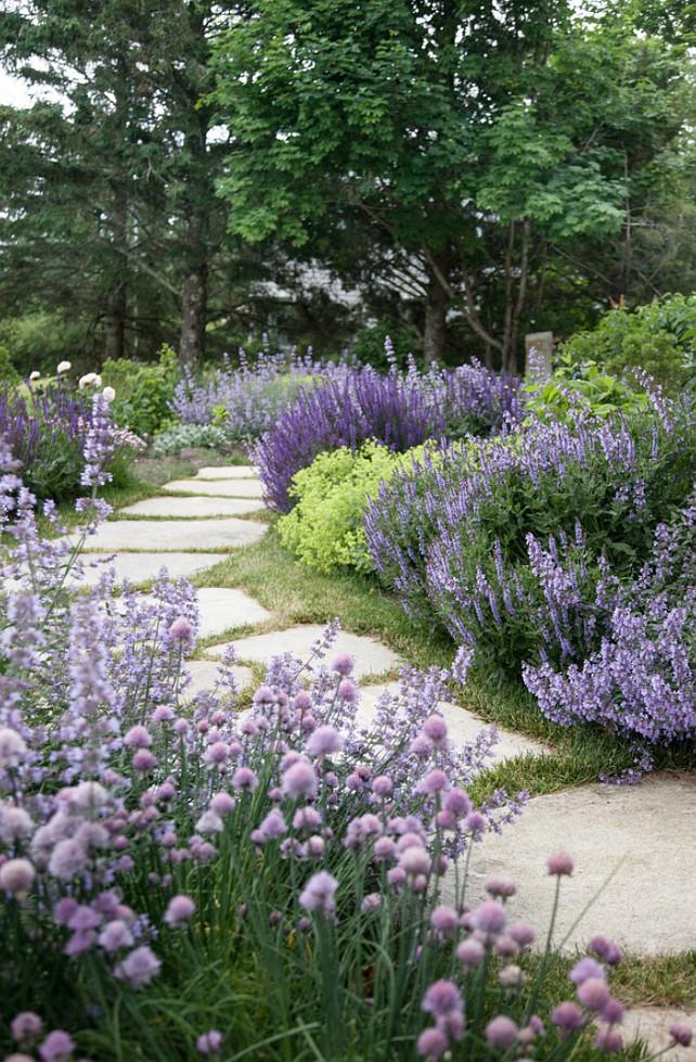 Garden Plants.  #Garden #Plants