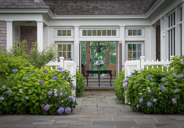 Garden. Beach House Gardening. Hydrangea. Cabriole legs. Chandelier. Entry table. Purple flowers. Purple hydrangea. Shingle roof. Sidelights. Transom windows. Weathered wood siding. White French doors.