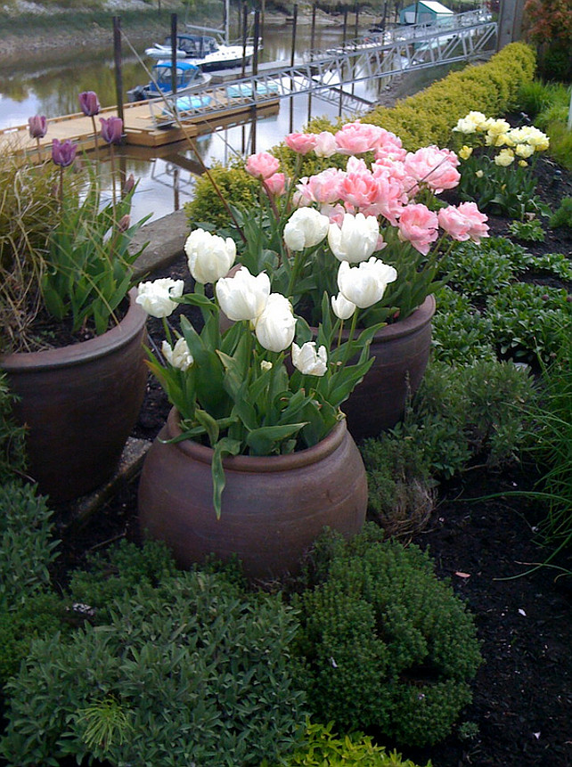 Garden. Planters. Cottage Garden cottage. Cottage perennial. Garden pink flowers. Pots and planters. Purple flowers. Spring flowers. Tulips, Vancouver gardens, White flowers Glenna Partridge.