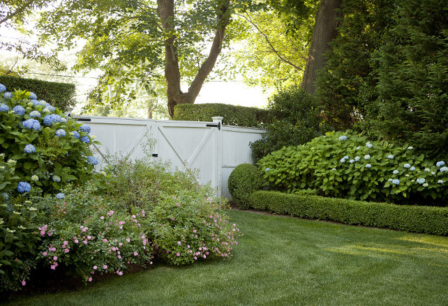 Hydrangeas. Backyard white fence, white gate, hedges, mature landscaping and blue hydrangeas. #hydrangeas Emily Gilbert Photography