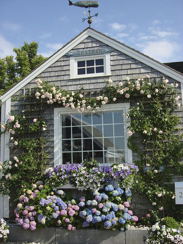 Nantucket Cottage. Shingle Nantucket Cottage. Nantucket Beach Cottage. Shingle Cottage with Roses and Hydrangeas. #NantucketCottage #Nantucket #NantucketHome #NantucketShingleCottage Via Ladybug Variety.