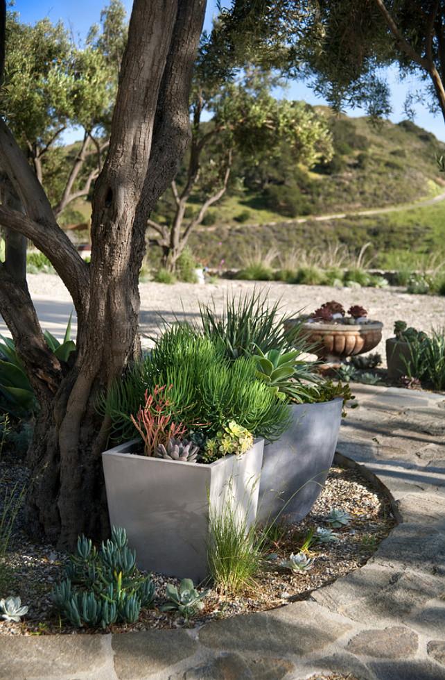 Planters. Planter Ideas. Planters #Planters #GardenPlanters Grace Design Associates.