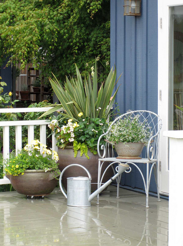 Potted Plants. Planters. Planter Ideas. Front door planters. The plants used on planters are mainly pale yellow, white, flowers and foliage - Large container: Phormium, lime green trailer is LYSIMACHIA NUMMULARIA 'AUREA', large mass of green on left is Strawberry plant - ever bearing type (edible), White flowers on right are Dahlia, Begonia richmondensis white, Osteospermum pale yellow variety, a miniature pale yellow climbing rose was also tucked into the container and shows up nice against the blue cottage. The colander on the chair has Euphorbia 'Diamond Frost' in it (Actually the plant is in the original container not planted in colander). The medium sized container has 3 Osteospermum pale yellow in the centre, 1 yellow Calibrachoa million bells trailing in front, and few white Bacopa trailers, white Nemesia near the Osteospermum.